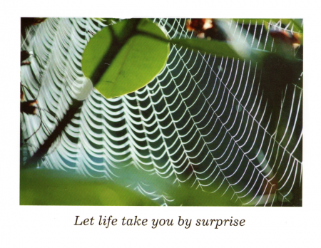 """Let Life Take You By Surprise"""