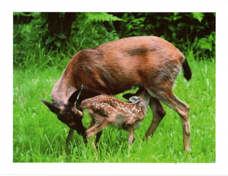 """Mother & Fawn: Grace Note"""